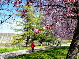 Mirar de primavera